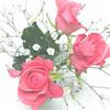 http://fuzzy.ta-sa.com/material/imag/other/flower/rosemini.jpg